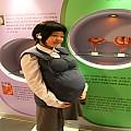 임신체험조끼 edu[KIM1-31]-주문시 약 15일이상 소요